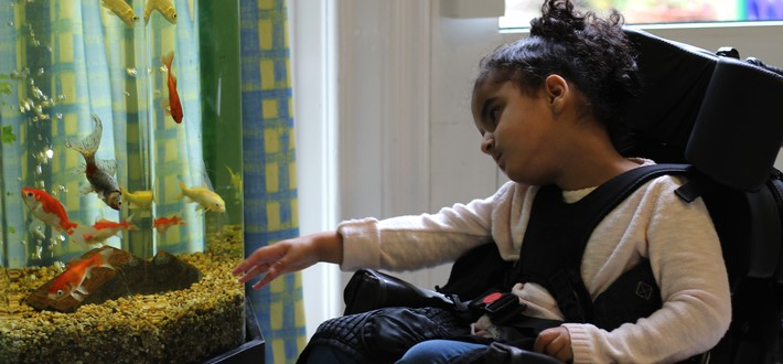 patient with fish tank
