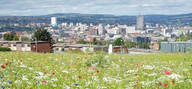 Sheffield Children's begins search for new governors